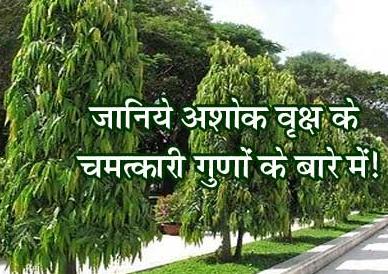 Ashok  Ped ke Chamatkari Asar