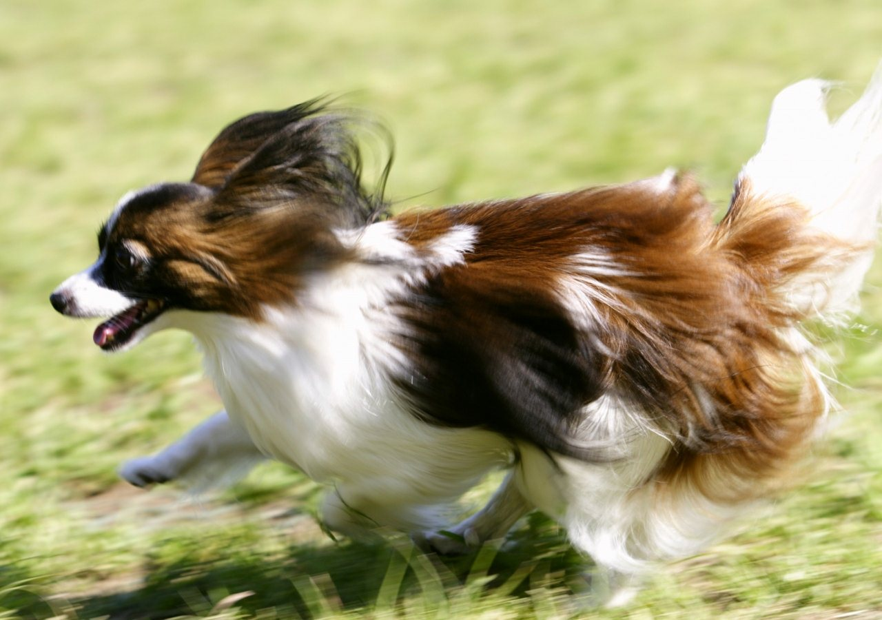 Best pics store cute dogs - Best dogs for small spaces pict ...