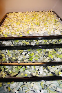 Leeks on the dehydrator trays