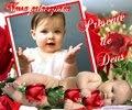 Rosas vermelha
