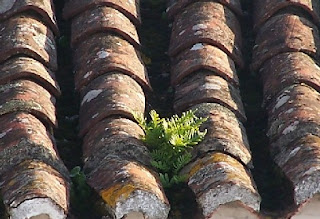 http://graosdeentendimento.blogspot.com.br/p/blog-page_29.html