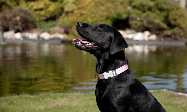 Good quality online photos improve the adoption of shelter dogs