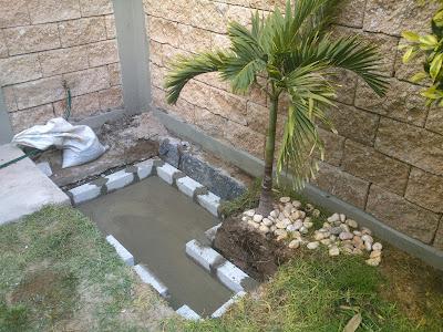 El estanque de mis tortugas el acuario for Estanque de tortugas