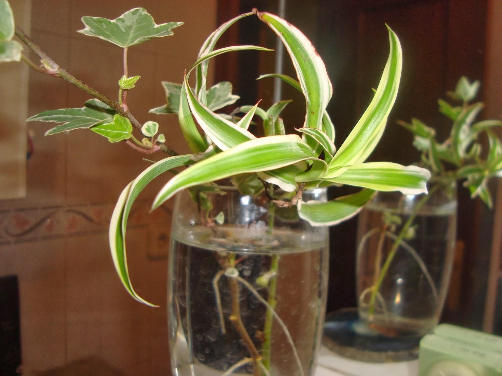 Floresamatxo todo sobre las flores consejos para cuidar for Plantas en agua interior