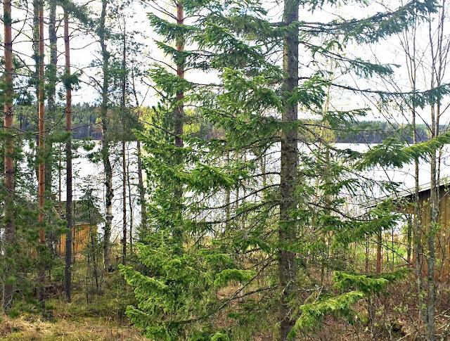 järvi, järvimaisema, kallavesi, kuopio