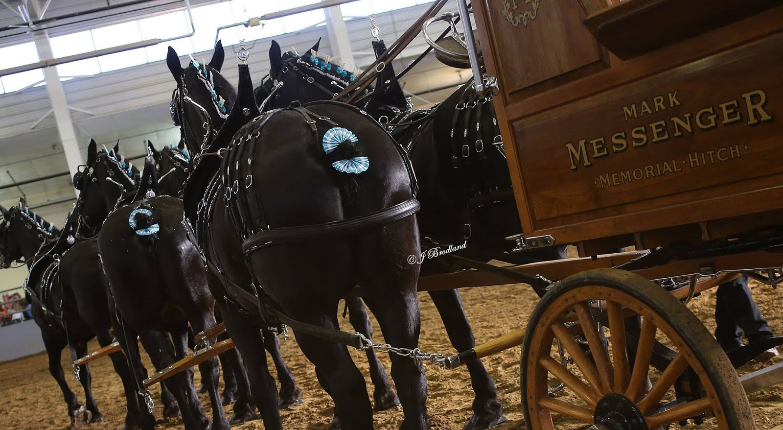 2016 Big Thunder Draft Horse Show