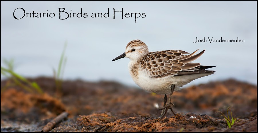 Ontario Birds and Herps