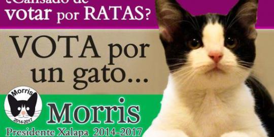 Kucing ini jadi calon wali kota di Meksiko