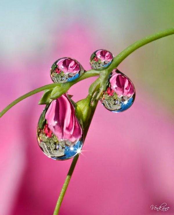 hinh giọt nước phản chiếu đẹp nhất