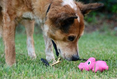 hippopotamus squeaky pink food toy