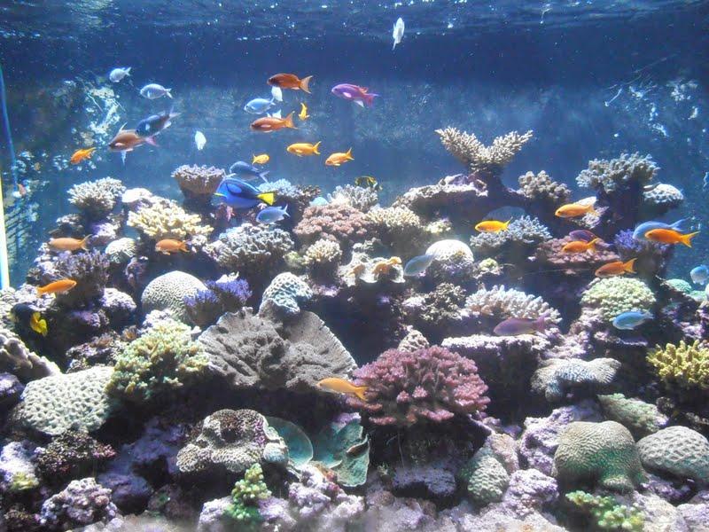 Arizona Gronseth Report Birch Aquarium At Scripps