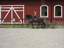 Svala visar vad hon lärt sig efter inridningen på Edeby Gård.