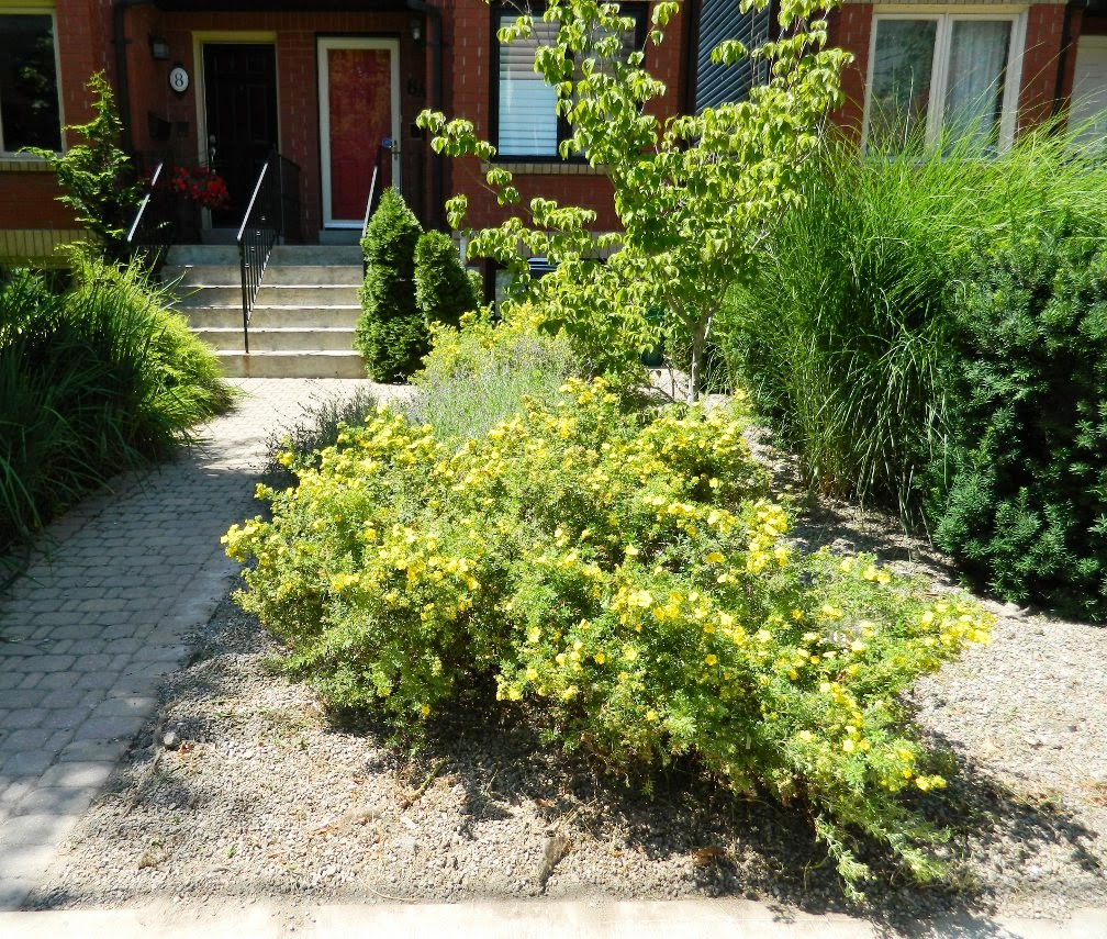 Leslieville front garden cleanup Paul Jung Toronto Gardening Services after