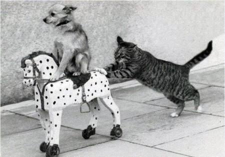 hình động vật hài hước