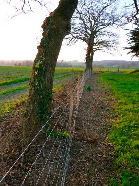 Permaculture in brittany renovating a natural hedge for Permaculture bretagne