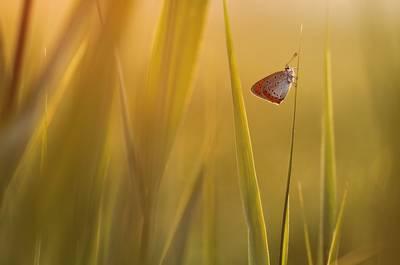 Butterfly by Johannes van Donge