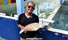 konservasi penyu laut di batu hiu pangandaran