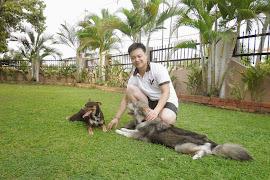 my dog Hershey a Siberian Husky