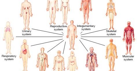 The Most Wonderful Creature: Human Body Systems