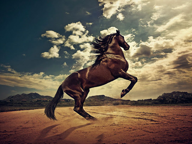 Amazing Brown Horse HD Wallpaper