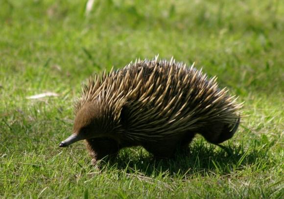 آشهر الحيوانات استراليــا