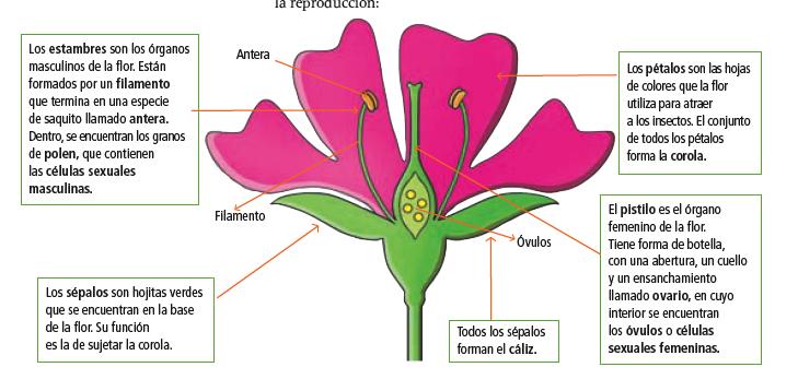 BELEN: Las plantas
