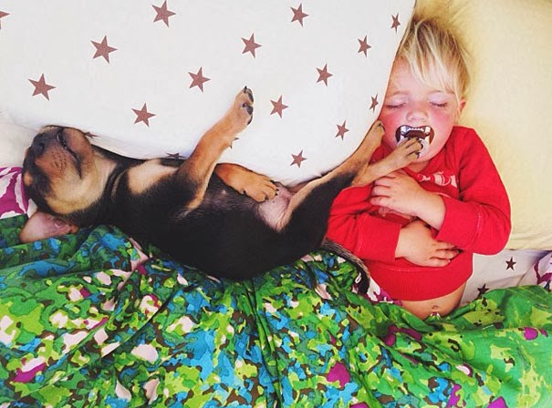 dog and toddler napping together1