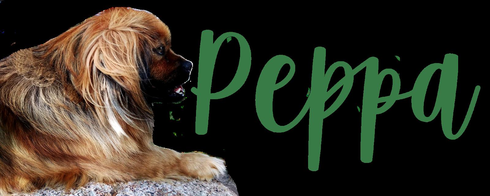 Peppa - mój kochany kundelek