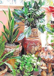 ... balkoniuntuk dihias dengan pelbagai tanaman hiasan dan aksesori taman