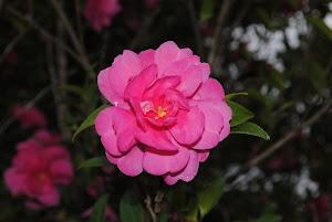 不動産 東京 Blogの花