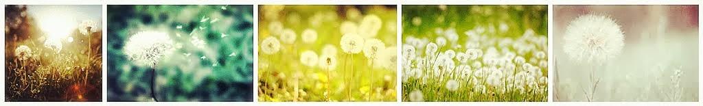 The Memory Of Dandelion