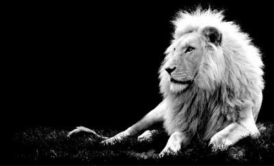 dicas fotos animais leão