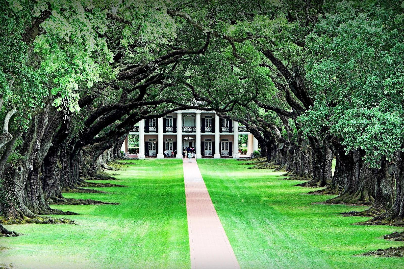 Ilclanmariapia alberi - Alberi adatti per viali ...