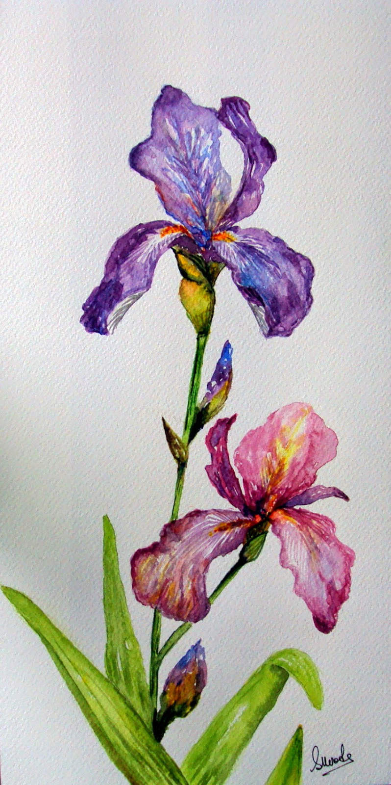 purple, iris, flowers, floral, painting, handmade, twin, buds, petals, watercolor,watercolour, nature, garden