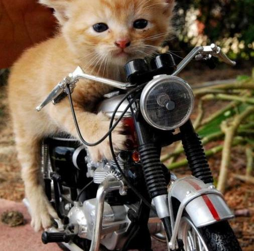 Funny Animals On Bike Beautifull Pictures And Wallpapers