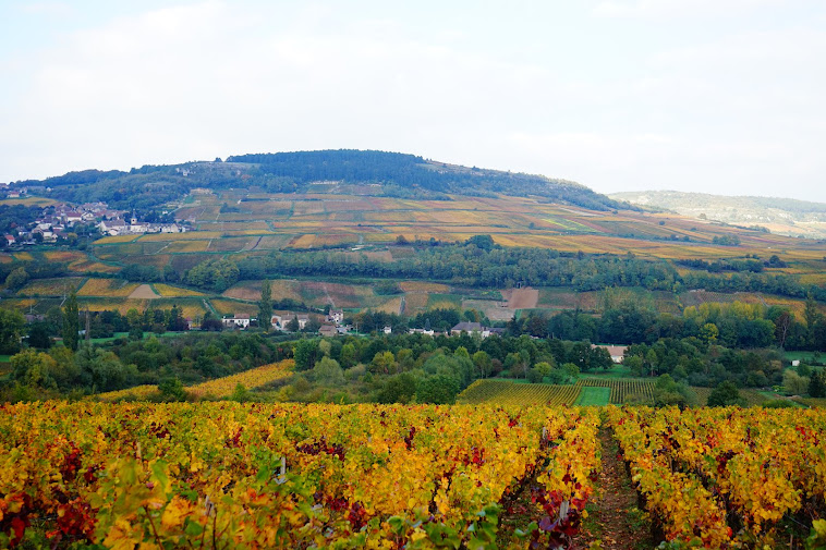 Maranges, Vins de Bourgogne : Domaine Regnard
