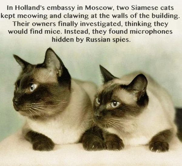 28 Amazing Facts That Will Blow Your Mind