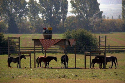 Idaho farm horse shelter