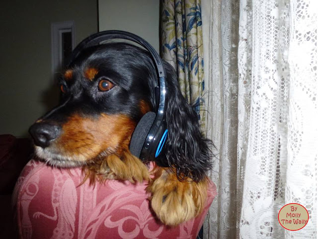 Molly The Wally listening to music!