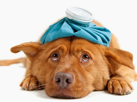 gripe canina ou tosse dos canis