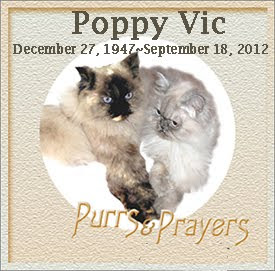 In Memory of Poppy Vic 18 Sept 2012