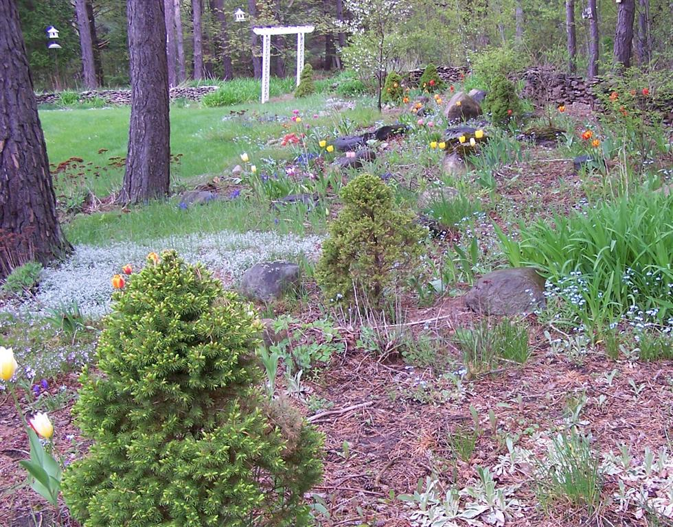 how to clean up a perennial garden