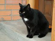 black cat wallpaper black cat