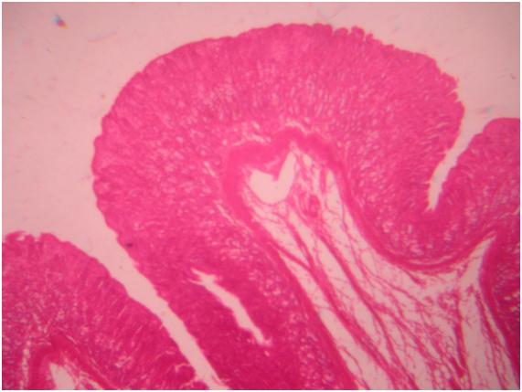 sharjeel human embryology pdf free download