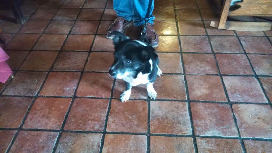 Hotel con mascotas en Cuenca