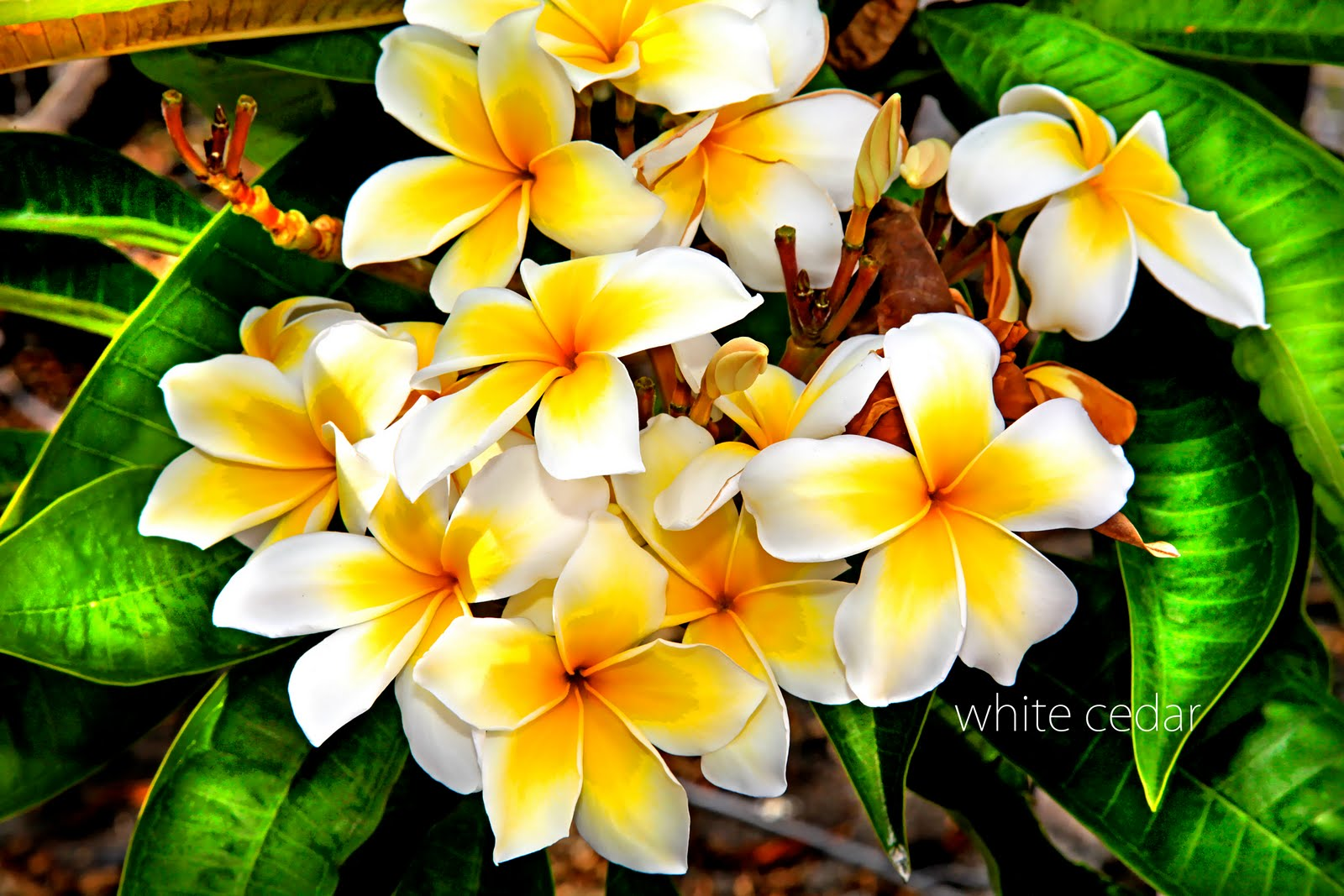White cedar photography green sand beach posted by white cedar mightylinksfo Gallery