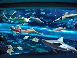 tarif hotel yang bisa tidur dengan ikan hiu