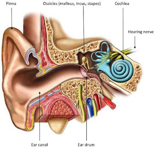 Common Causes of Deafness and How You May Be Able to Prevent It