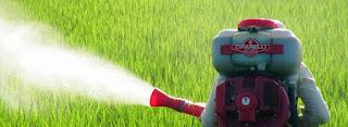 Insectele si daunatorii afecteaza periodic sanatatea culturilor tale? Afla acum daca atomizorul este o solutie optima pentru a porni lupta pentru combaterea lor!