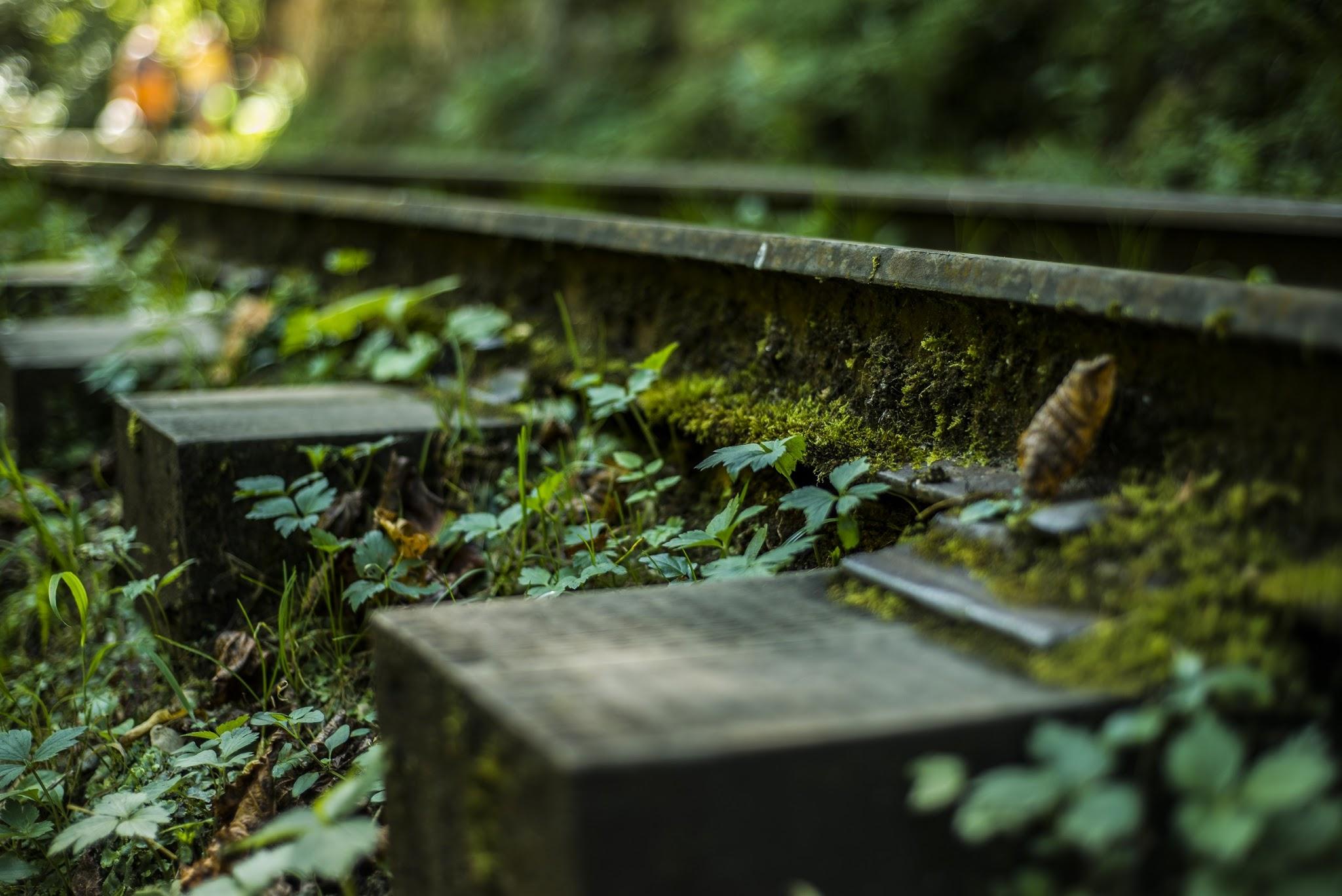 Рельсы в лесу Гуамского ущелья